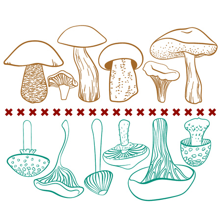Poisonous and edible mushrooms vector table on white background Illustration