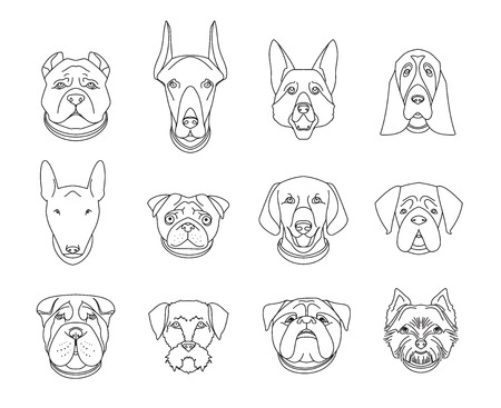 doggies: Popular breeds of dogs. 12 linear icons isolated on white.