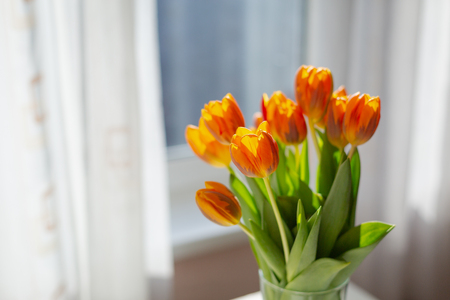 Primavera de tulipanes naranjas en un jarrón cerca de la ventana por la mañana.