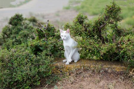 A young white domestic and cute cat is sitting in a green wild bush. Waits a petting.