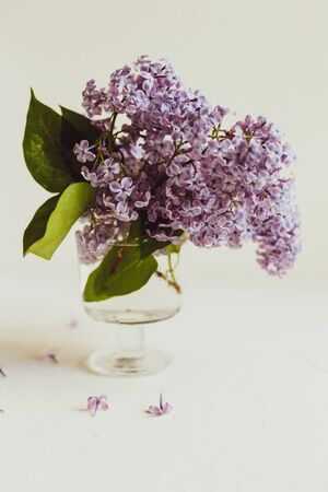 Purple spring lilac flowers still life on white background in the morning. Glass vase with water and purple lilac. Stockfoto