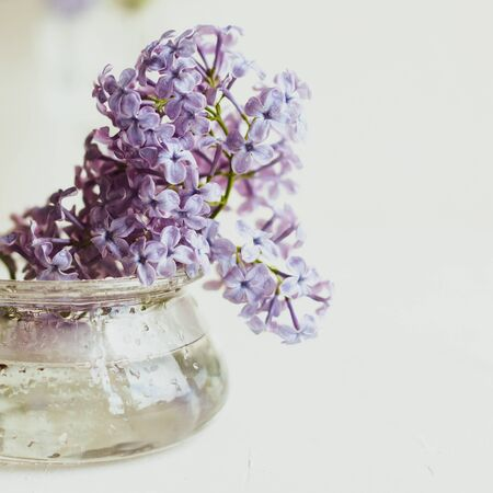 Purple spring lilac flowers still life on white background in the morning. Glass vase with water and purple lilac. Stock fotó