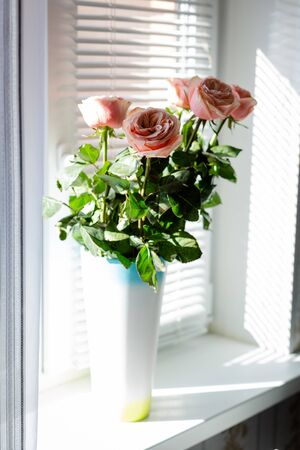 High fresh ranunkuluses in a vase on the window. Shadow and sun beams through the window shutter. Stock fotó