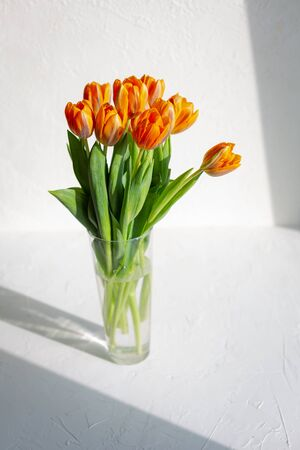 Spring orange tulips in a bunch on white background.