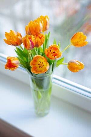 Spring orange tulips  in a vase near the window in the morning.