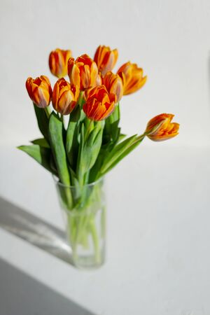 Spring orange tulips in a vase on the white background.