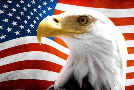 halcones: �guila en el primer plano con la bandera americana borrosa Foto de archivo