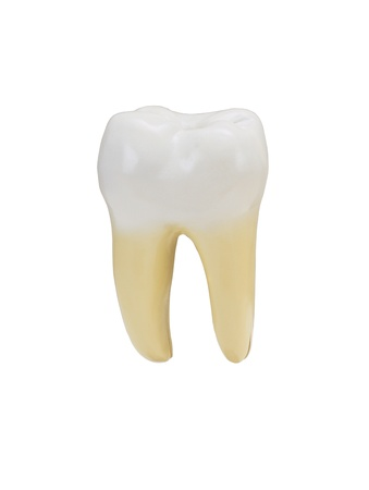 a tooth isolated on a white background