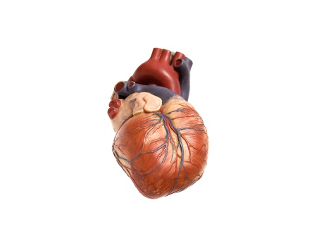 circulation: heart artificial Stock Photo