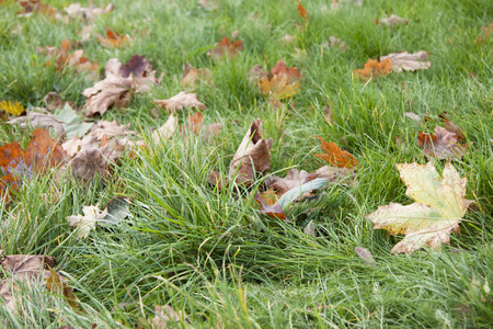 Dry leaves in grass close up background photo