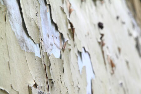 crackles: old paint wall background or texture for site Stock Photo