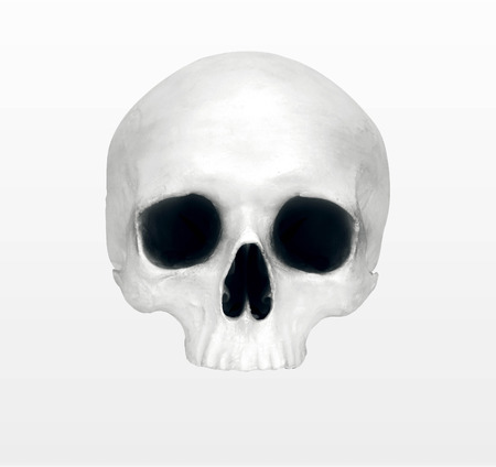 close up of a skeleton on white background Banque d'images