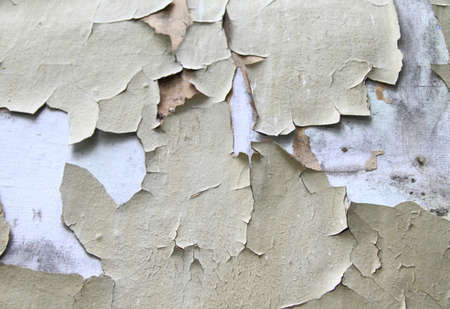 crackles: Old paint peeling from wall background