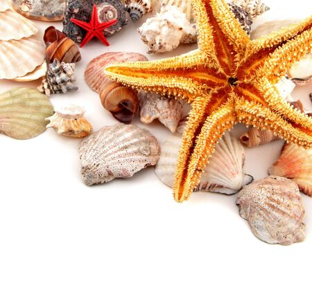 Seashell collection on white or isolated Stock Photo
