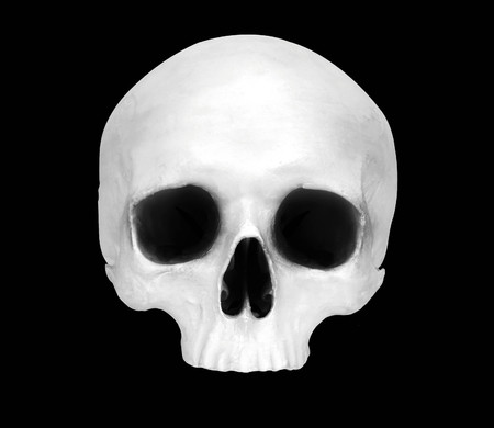 Front view of a fake skull