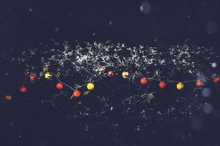 Decoration light background on outdoors tree with heavy snowy winter weather. Red and yellow light color for Christmas and New year party festival celebration with copy space. Low key toned