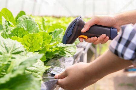 Primer plano de un agricultor moderno que comprueba la identificación de verduras orgánicas con un escáner de código de barras en un sistema de escaneo futurista de granja hidropónica. Tecnología y negocio futurista. Agricultura y ganadería Foto de archivo