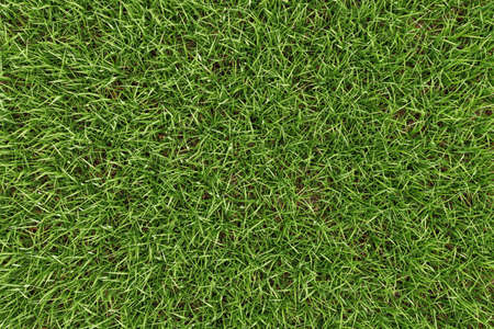Closeup green grass texture background. Nature and environment backdrop concept. 3D illustration rendering