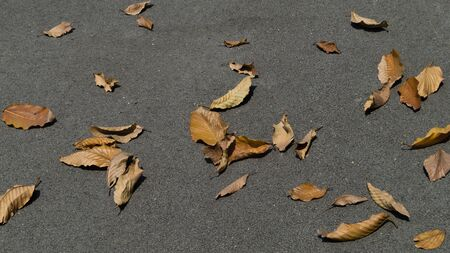 sear and yellow leaf: Dry leaves on the asphalt road background. Stock Photo