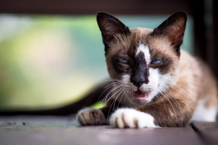 agitated: Agitated cat Stock Photo
