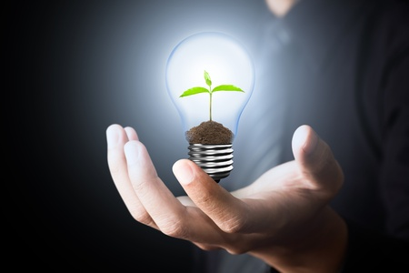 small lamp: Light Bulb with sprout inside