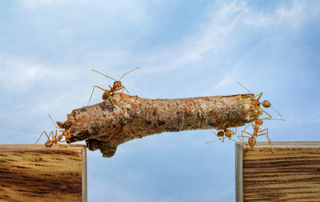 Ants carrying wood across channel, teamwork concept