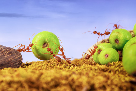 Ants carrying food together, teamwork concept