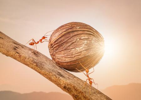 개미 함께 음식을 들고 팀워크 개념 스톡 콘텐츠