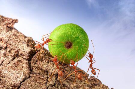 Hormigas que llevan comida juntos, concepto de trabajo en equipo