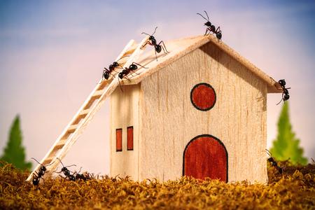 Ants build a house with ladder, teamwork concept Foto de archivo
