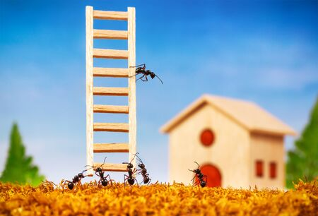 Ants build a house with ladder, teamwork concept Stock Photo