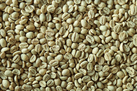 Raw green fresh coffee bean, nature 版權商用圖片