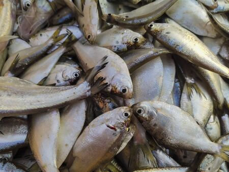Lots of Indian Fishes selling in the Indian Market.