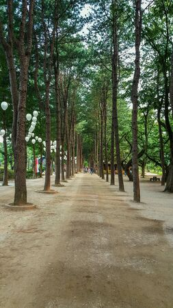 midst: Walk way midst the nature in korea.