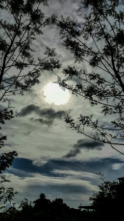 Sillhouette trees front of the sun. Stock Photo