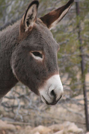 burro: Burro Face Stock Photo