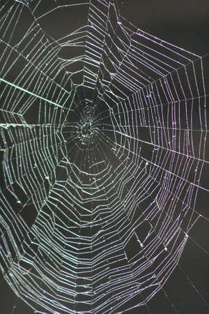 Spider Web Banco de Imagens