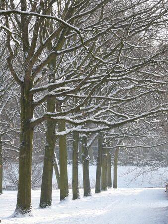 winter park Imagens - 6368010