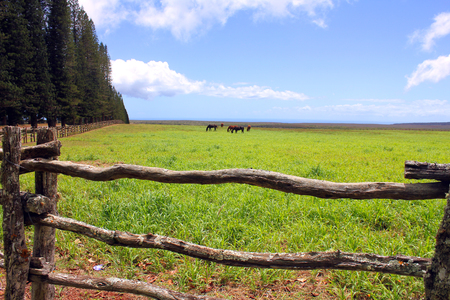 green field on Lanai