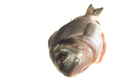 gilthead bream: gilt-head bream over white surface
