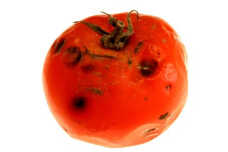 moulder: image of a rotten tomatoe captured on white