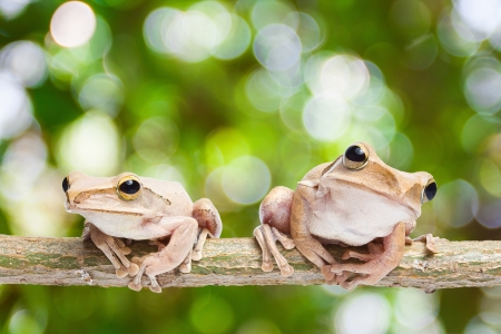 warble: Two, frog on green bokeh background