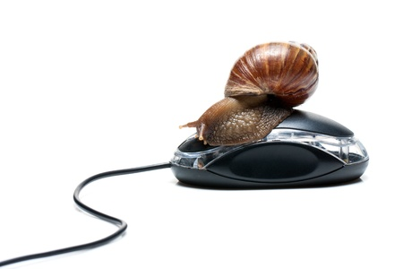 Snail on mouse photo