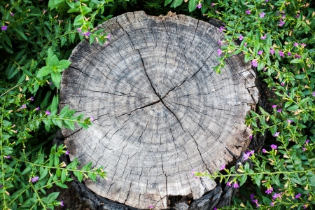 Texture of tree stump, with nature background
