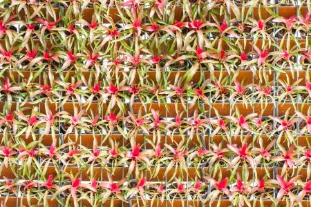 Bromeliad vertical gardening   photo