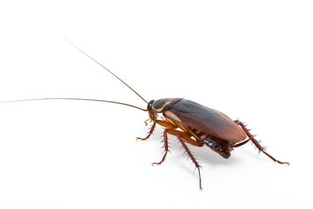 Cockroach  Archivio Fotografico