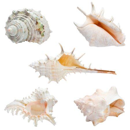 set of sea shells isolated on white  photo