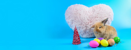 Fluffy brown bunny sit on clean blue background with Pink heart pillow and colorful eggs, little rabbit with copy space for text
