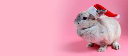 Fluffy brown bunny wear santa claus hat sit on clean pink background, little rabbit and copy space for text Stock Photo