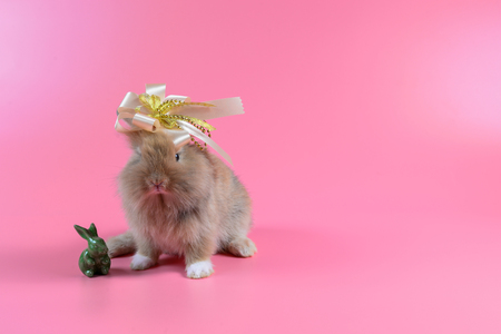 brown rabbit on pink background with golden bow on head and green rabbit doll.